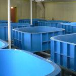 Особенности строительства бассейна из полипропилена